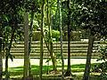 Flickr - archer10 (Dennis) - Belize-0982.jpg
