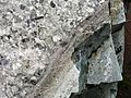 Flickr - brewbooks - Interesting rock (Maybe Granite with Phenocrysts^) (1).jpg