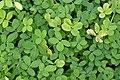 Flora of Kerala 8655.jpg