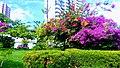 Flores parque do Cocó.jpg