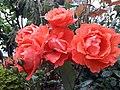 Flower20180428 085502.jpg