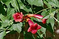 Flower (227954697).jpeg