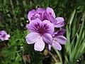 Flower (41325534).jpeg