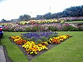 Flower beds in the gardens next to the seafront in Sheringham - geograph.org.uk - 1096808.jpg