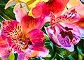 Flowers (37393539306).jpg