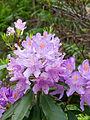Flowers (8015273587).jpg