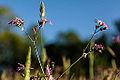 Flowers and blue sky (13902023045).jpg