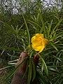 Flowers somewhere in Africa BURUNDI.jpg