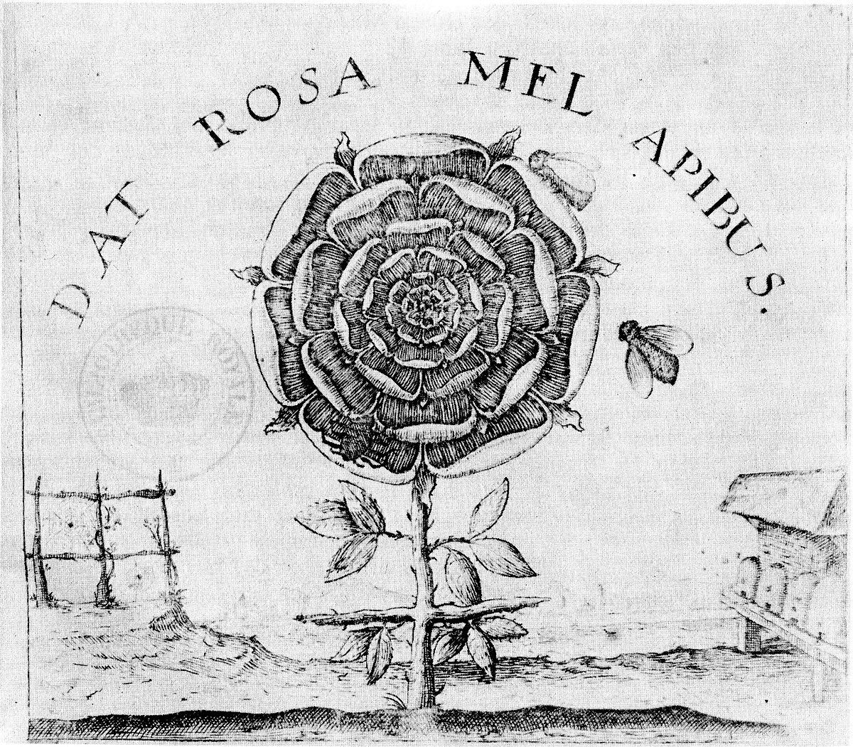 Rose Cross Wikipedia