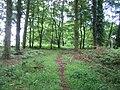 Fonthill Bushes near Chicklade 2 - geograph.org.uk - 916414.jpg