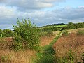 Footpath through grassland, Newton Tracey - geograph.org.uk - 964786.jpg