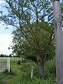 Footpath to Dunwich Lane - geograph.org.uk - 1316398.jpg