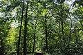 Forêt de Bon-Secours 11.jpg