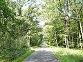 Forêt de Juigné (Juigné-les-Moutiers).JPG