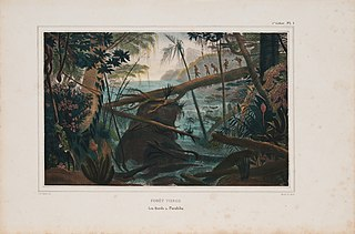Forêt vierge le bords du Parahïba