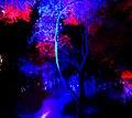 Forest 01 (30381922554).jpg