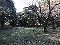 Forest near Unzen Resort Hotel.jpg