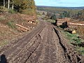 Forest track in Fetteresso Forest churned up by logging activity - geograph.org.uk - 1549831.jpg