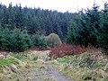 Forest track towards Nant y Craflwyn, Powys - geograph.org.uk - 1058765.jpg