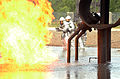 Fort Bragg firefighters train on burning plane 120606-A-IA524-704.jpg