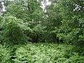 Foxhills Plantation - geograph.org.uk - 476666.jpg