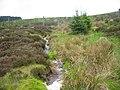 Foxhole Sike - geograph.org.uk - 1324384.jpg