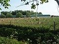 Free Range Hens - geograph.org.uk - 801909.jpg