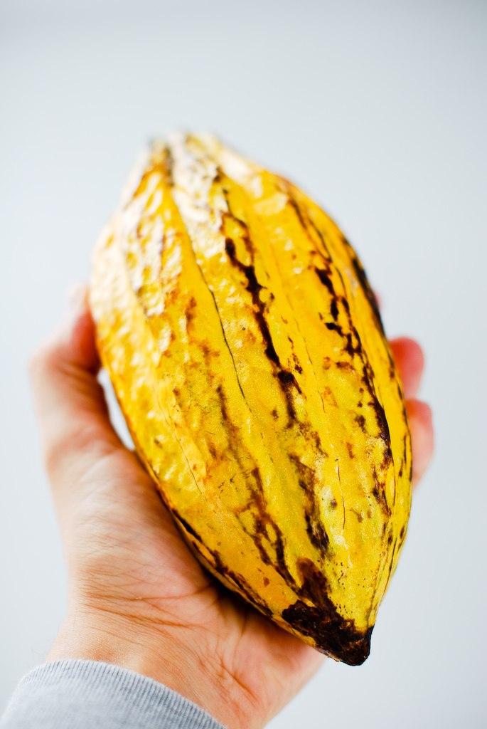 Fresh Cacao from São Tomé & Príncipe (4859837584)