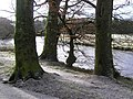 Frost, Camowen River bank - geograph.org.uk - 1150044.jpg