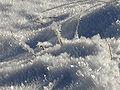 Frost, Poland.jpg