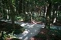 Fußweg Felsengarten Sanspareil 04082019 029.jpg