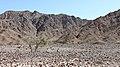 Fujairah - panoramio (1).jpg