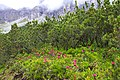Fulpmes Stubaital - panoramio (25).jpg