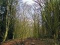 GOC Historic Stevenage 043 Monks Wood, Stevenage (27134961070).jpg