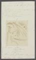 Gammarus mutilus - - Print - Iconographia Zoologica - Special Collections University of Amsterdam - UBAINV0274 098 02 0015.tif