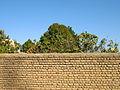 Garden Way - Wall - trees - streamlet - 17 Shahrivar st - Nishapur 37.JPG