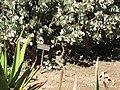 Gardenology.org-IMG 0268 hunt07mar.jpg