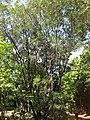 Gardenology.org-IMG 0572 rbgs10dec.jpg