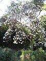 Gardenology.org-IMG 0716 hunt07mar.jpg