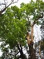 Gardenology.org-IMG 7159 qsbg11mar.jpg