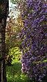 Geilston Garden flowers.jpg