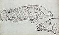 Gelderland1601-1603 Labridae1.jpg