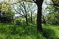 General view - Arnold Arboretum - DSC06732.JPG