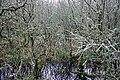 Geograph-267472-Anne Burgess-Wetland at the Loch of Strathbeg.jpg