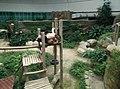 Giant Panda Conservation Centre in Zoo Negara Malaysia 2021 (13).jpg