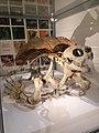 Giant turtle skeleton.jpg