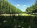 Giardini di Palazzo Arese Borromeo - CESANO MADERNO (MB).jpg