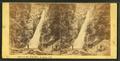 Glen Ellis Falls, White Mountains, N.H, by Bierstadt Brothers 2.png