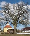 Glienicke church tree.jpg