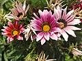 Godawari Flowers.jpg